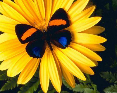http://siteofgirl2008oboi.narod.ru/normal_flowers01.jpg